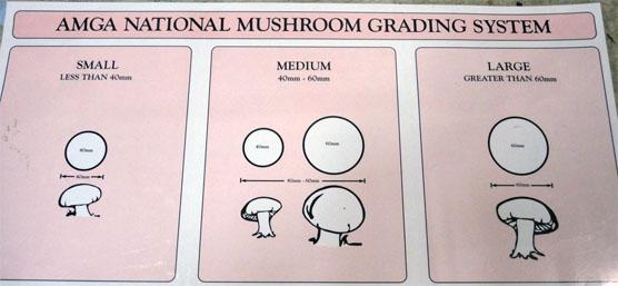 Mushroom Grading System