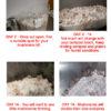 Oyster Mushroom Kit Growing Instructions